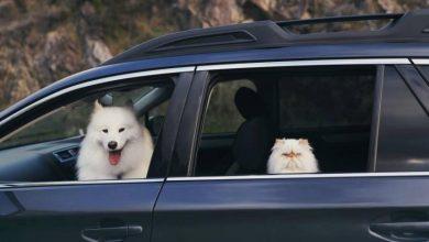 Photo of كلب وقطة يشعلان مواقع التواصل الاجتماعي لهذا السبب..